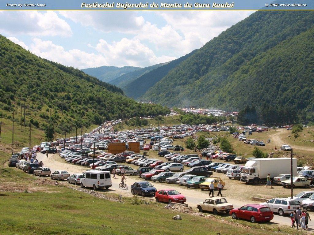 Festivalul-Bujorului-din-Gura-Raului-(-Sibiu)-20080712080442-festivalul-bujorului-de-munte-de-gura-raului-1303370494